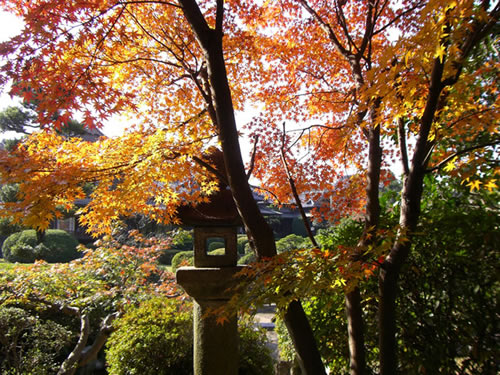 Japanese maple and stone lantern