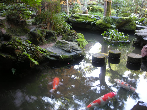 Image gallery japanese koi pond for Japan koi fish pond