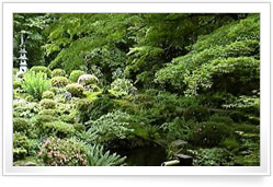 Japanese Garden Ideas Plants find this pin and more on garden ideas Garden In Kyoto Tea Garden
